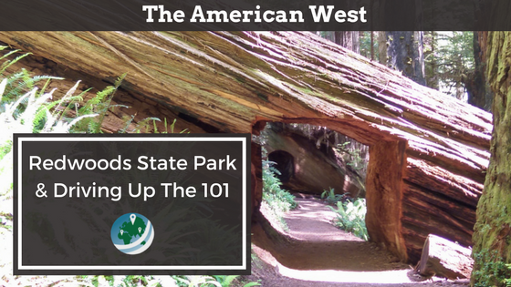 Featured Image for Redwoods State Park and Driving Up the 101