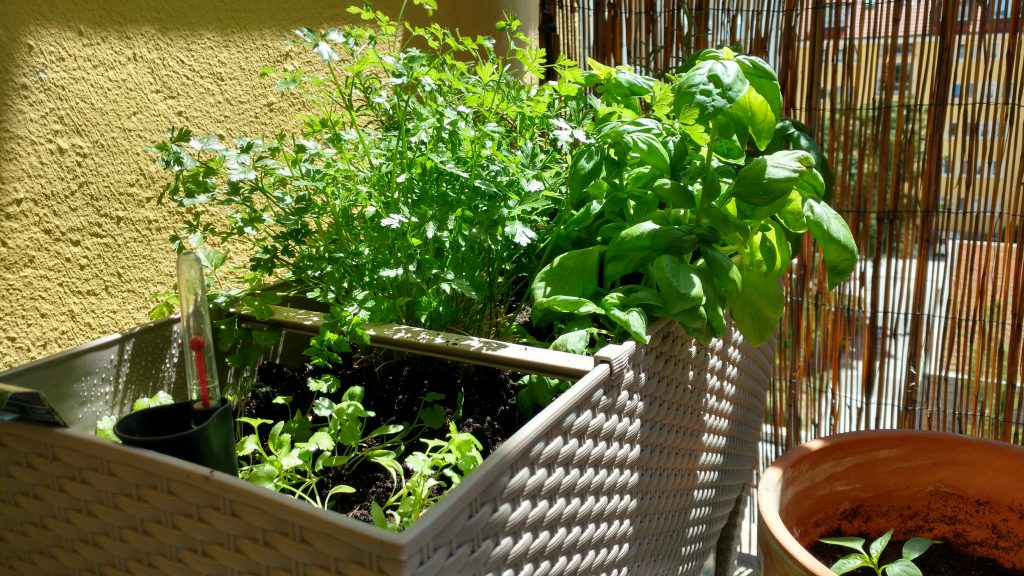How to Live More Sustainably by growing your own herbs.