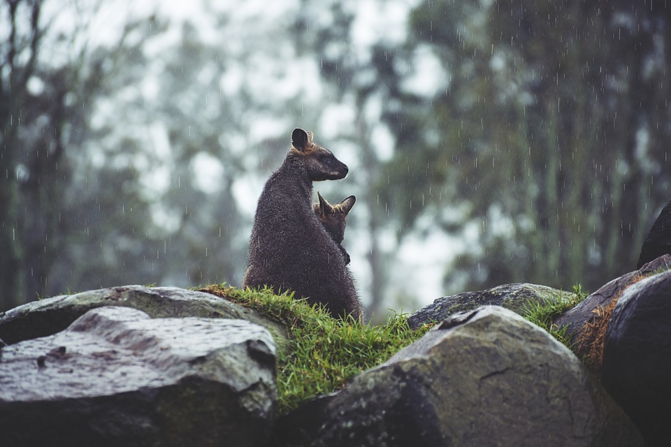 48 hours in Sydney Zoo